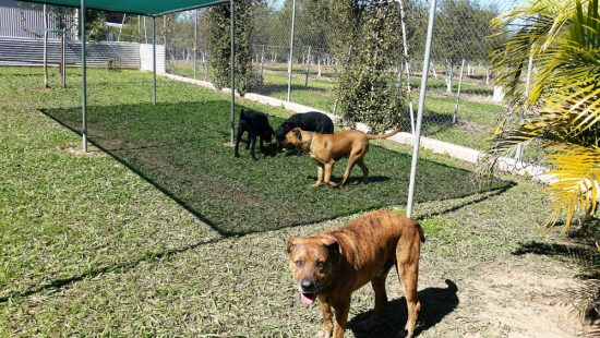 Dog boarding Coffs Harbour - TLC Pet Care