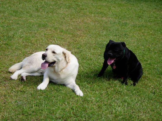 Dog sitting Coffs Harbour - TLC Pet Care